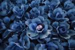 Cabbage Mind - pt I by CorneliaGillmann