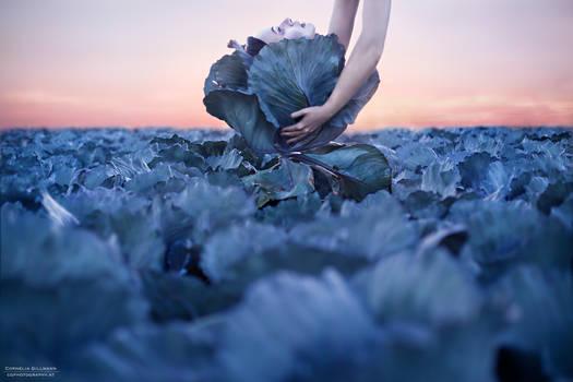 Cabbage Mind - pt II