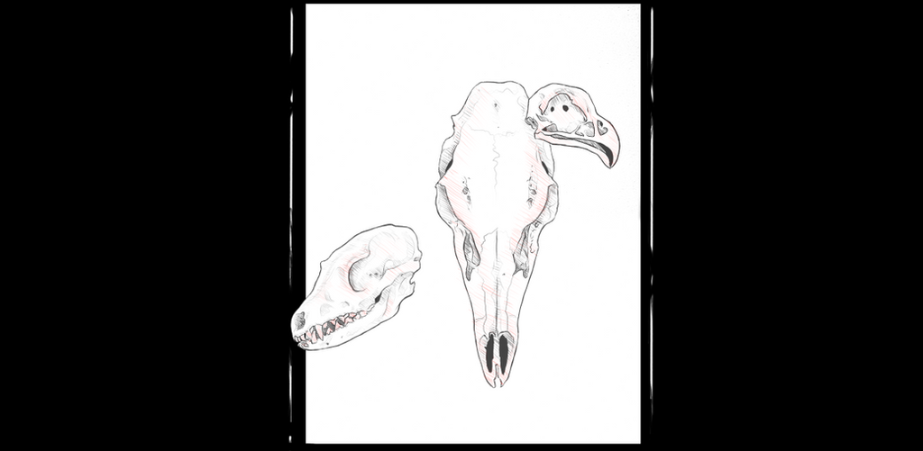 Animal Skulls by camiio
