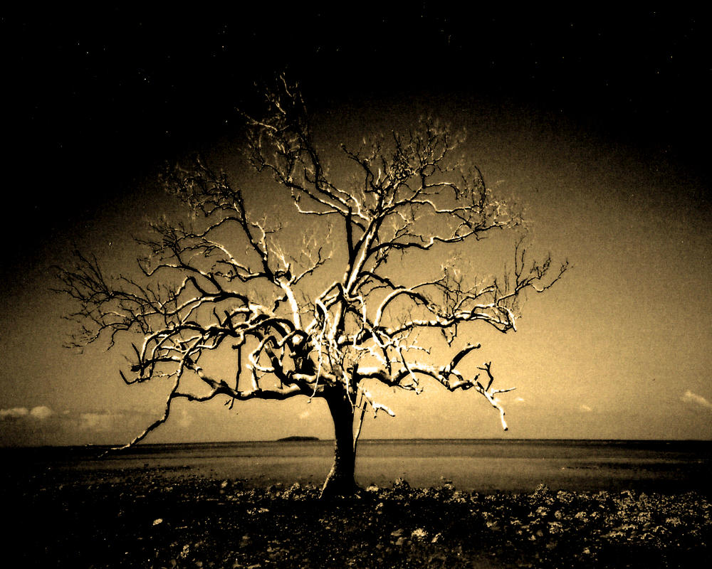 Dark tree images