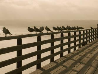 albatros tranquility by shutterlight