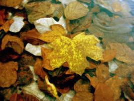 Pastel by shutterlight