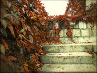 Autumn's Footsteps