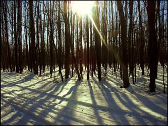 Long Shadows by shutterlight