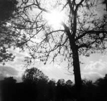 the sad rainy tree of my heart by NoQuarter666