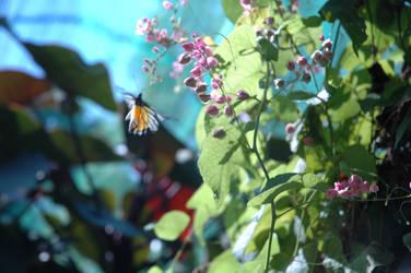 butterfly 2 by zigis