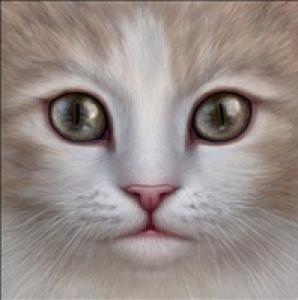 xXMeadowStarXx's Profile Picture