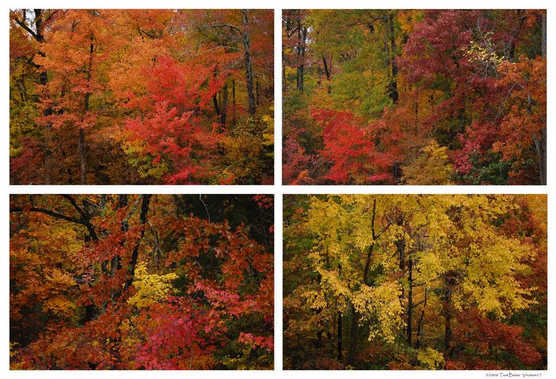 autumn window by photom17