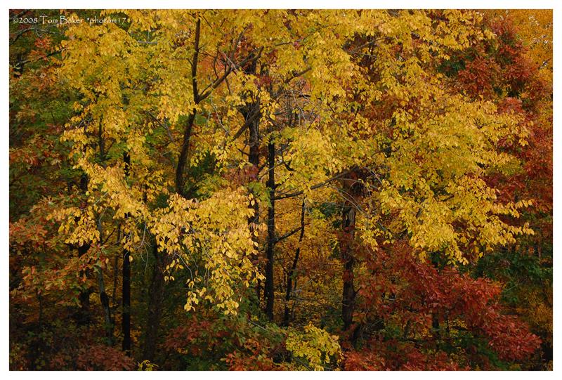 autumn pane IV by photom17
