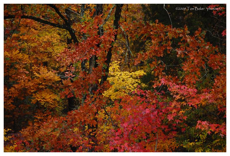 autumn pane III by photom17