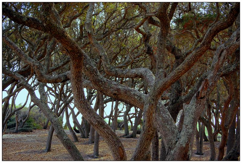 tangled by photom17