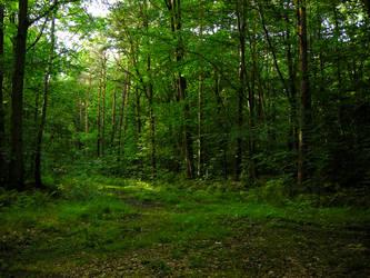 Leafy Trees Forest Wonderworld by CiNiTriQs