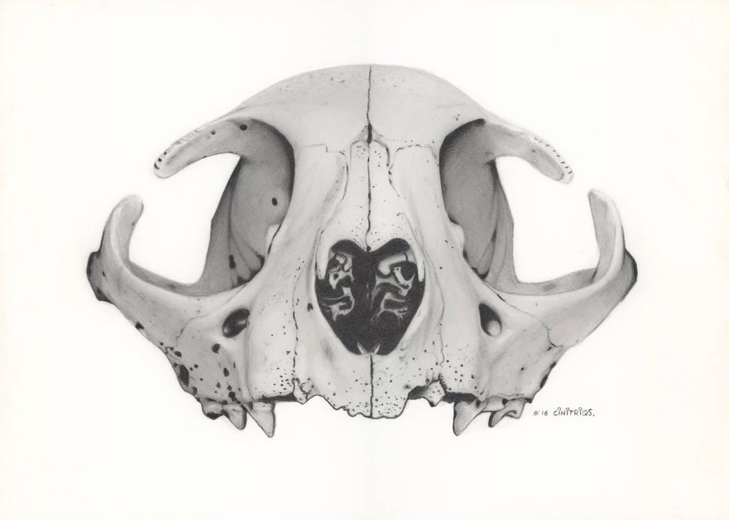 Skull Kittie Cat