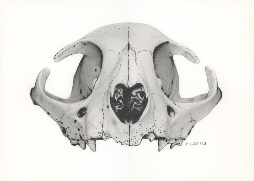 Skull Kittie Cat by CiNiTriQs