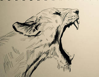 Roar by sumilee