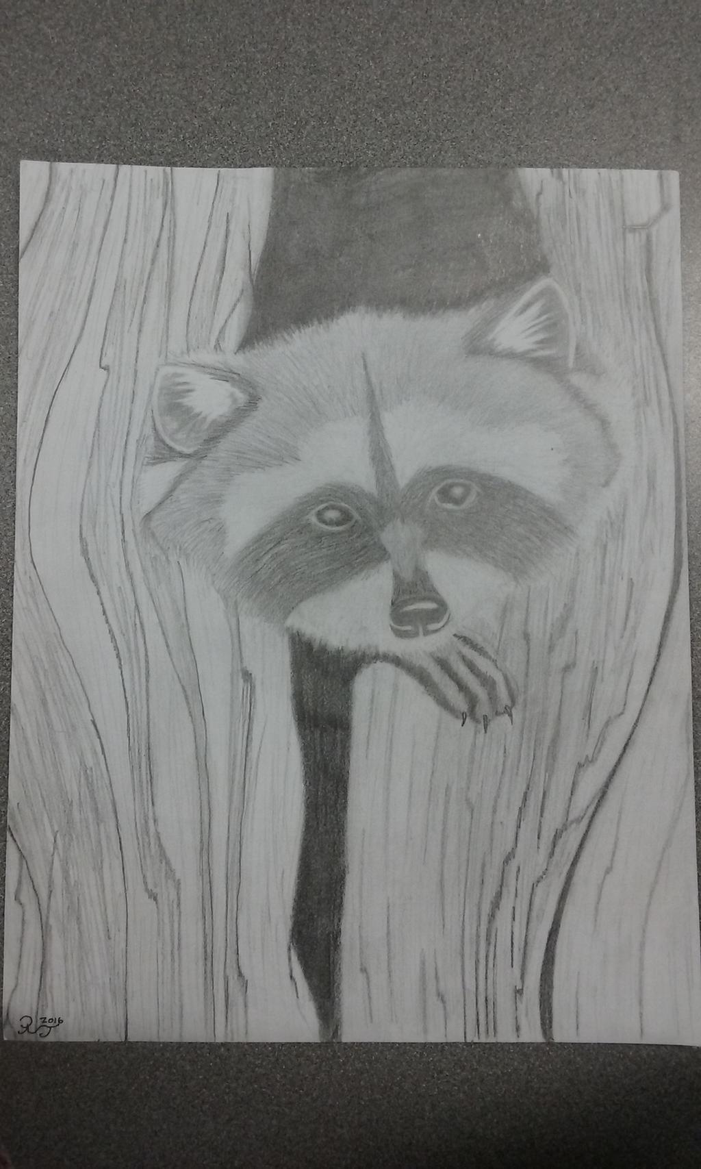 Raccoon by Major-Ren