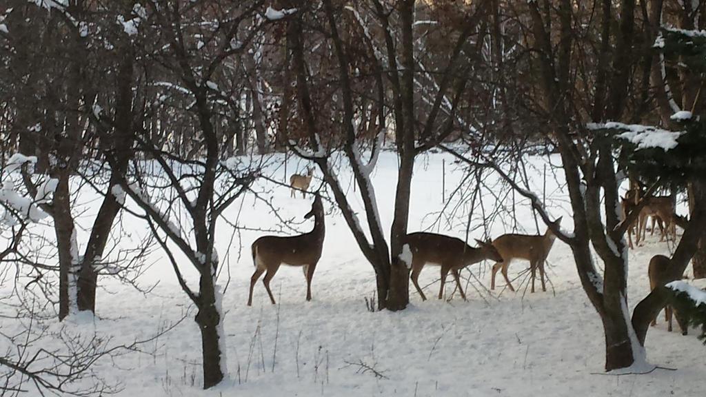 Deer by Major-Ren
