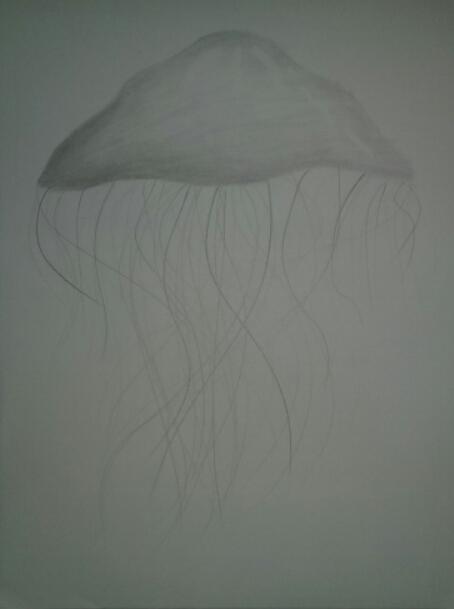 Jellyfish by Major-Ren