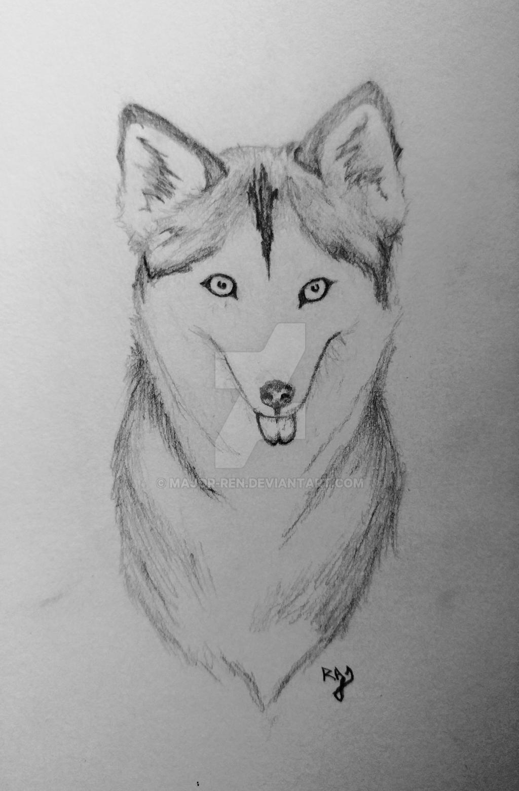 Husky by Major-Ren