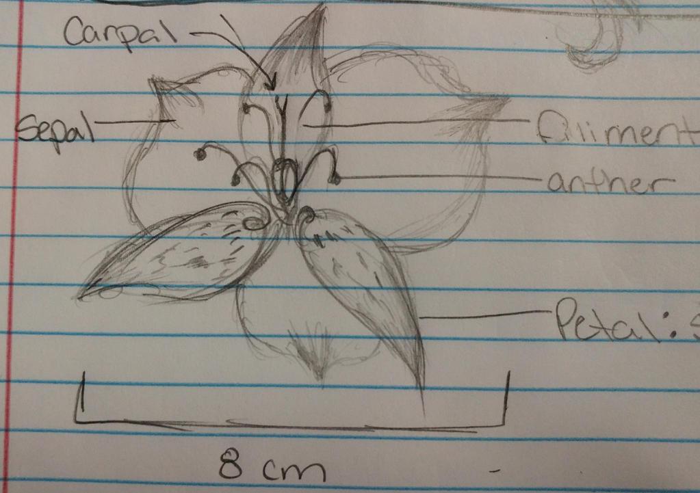 My Beautiful Bio Drawing by Major-Ren