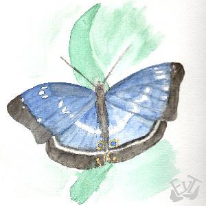 Efy-Apatura's Profile Picture
