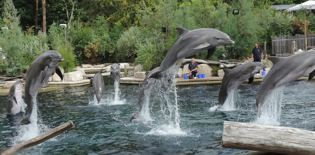 Happy dolphin day by Shippochan1000