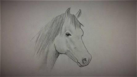 a beautiful horse