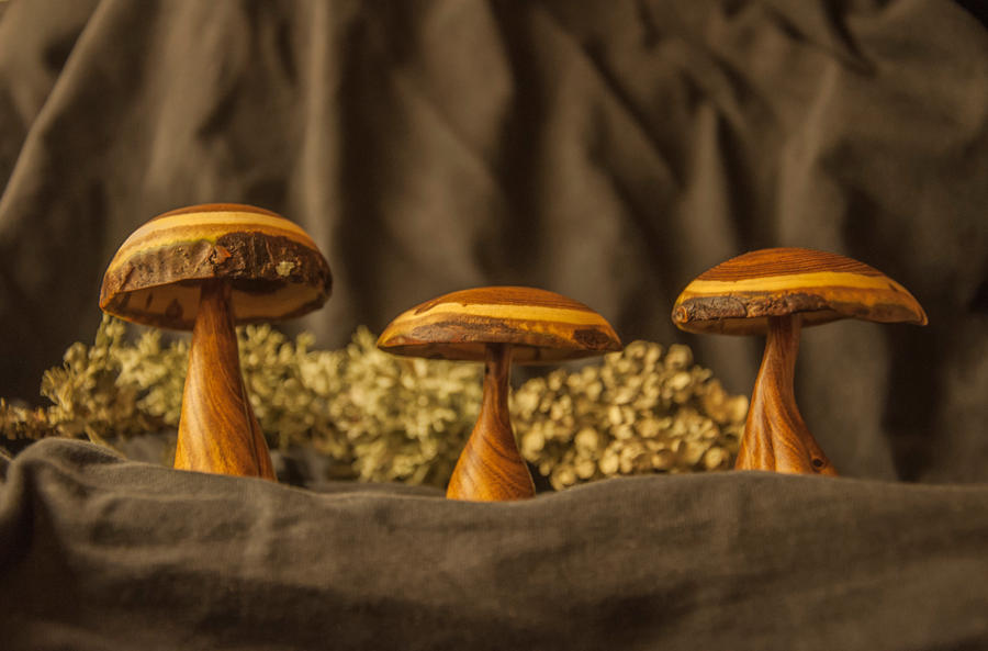 Laburnum Mushrooms by magnifEyes