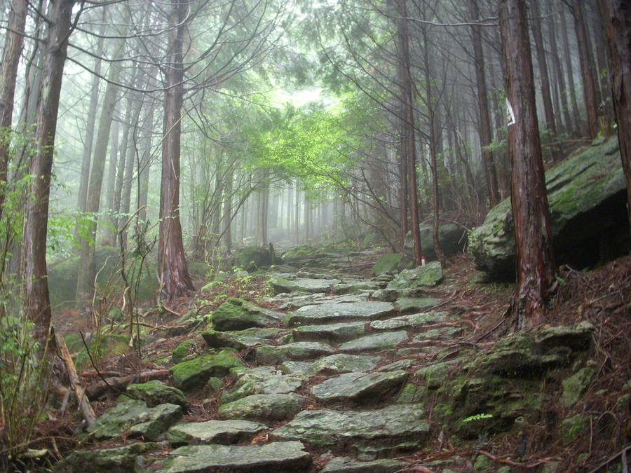 http://img05.deviantart.net/120a/i/2012/062/f/2/ancient_mountain_forest_stone_path_misty_by_omnimalevolent1-d4rlp4j.jpg