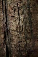 Tree Bark-Texture by dirtygentlemen