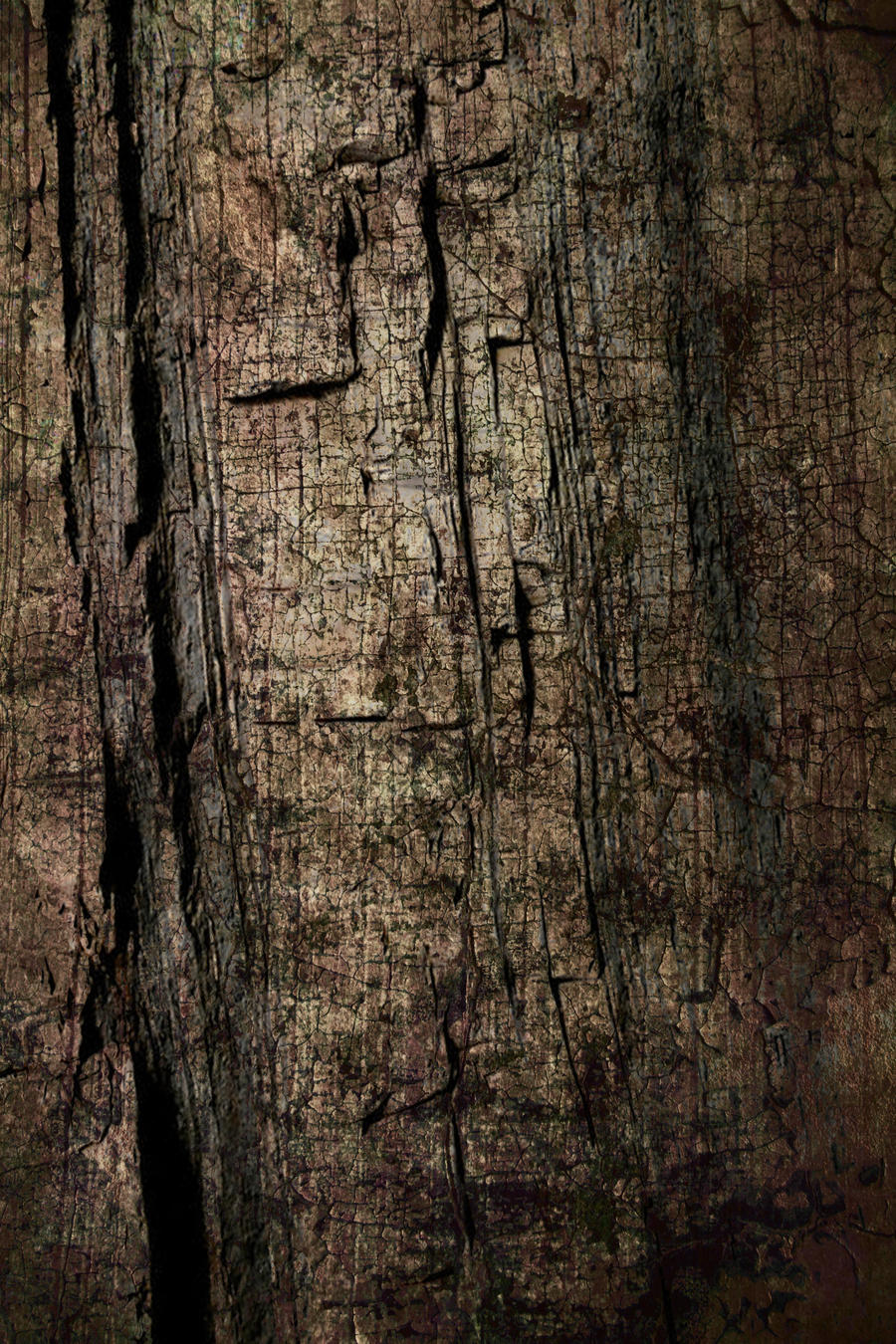 Tree Bark-Texture by dirtygentlemen