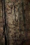 Tree Bark-Texture
