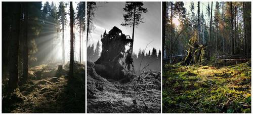 Forest Randomness