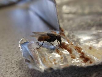 A Fly on Manner Schnitten by mangei
