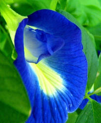 Gorgeous Blue Flower