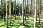 Muhldorfer Forest by Rangutan
