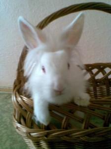 imascakova's Profile Picture