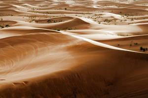 Desert 01 by neverFading-stock