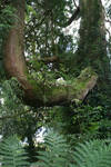 Ancient Tree 02