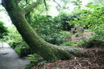 Ancient Tree 03