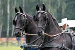 Friesian Carriage 01