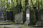 Squirrel On Grave