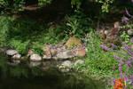Pond 002