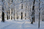 Snowy Park 001