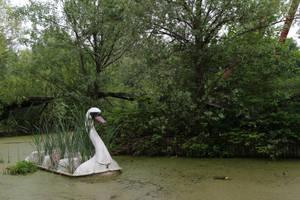 Swan 001