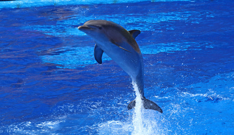 Dolphins 002 by neverFading-stock