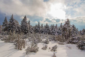 Winterscape 009 by neverFading-stock