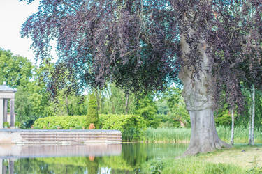 large tree and pond