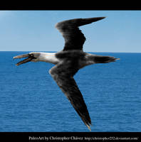 Pelagornis chilensis by Christopher252