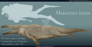 Maiacetus inuus